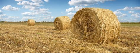 Sell Hay Online | Where to Sell Hay | AllHay
